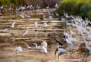 Egret Pond