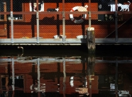 Houseboat with cats real and fabricated