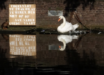 """The sign says something about a """"bird raft."""""""