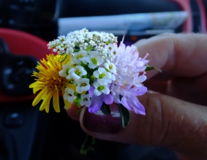 I noticed thousands of miniature wildflowers growing on the high ridges. They are perfectly formed miniatures of their full-sized counterparts. I couldn't resist picking this little wild bouquet for Sarah.