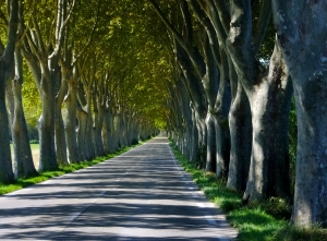 Every road in Provence leads to a new wonder. Plane trees near Saint-Rémy-de-Provence make the road a magical tunnel.