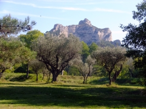 Vincent must have set up his canvas very near this very spot, with a view of the Alpilles beyond the olive trees.