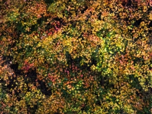 The leaves on the trees were turning from green to a thousand shades of red and gold.