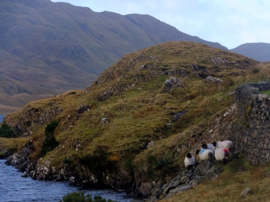 These days, in the Doolough Valley, as in most of rural Ireland, sheep can be found wandering by the roads.