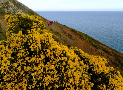 Gorse flowers provide startling splashes of yellow.